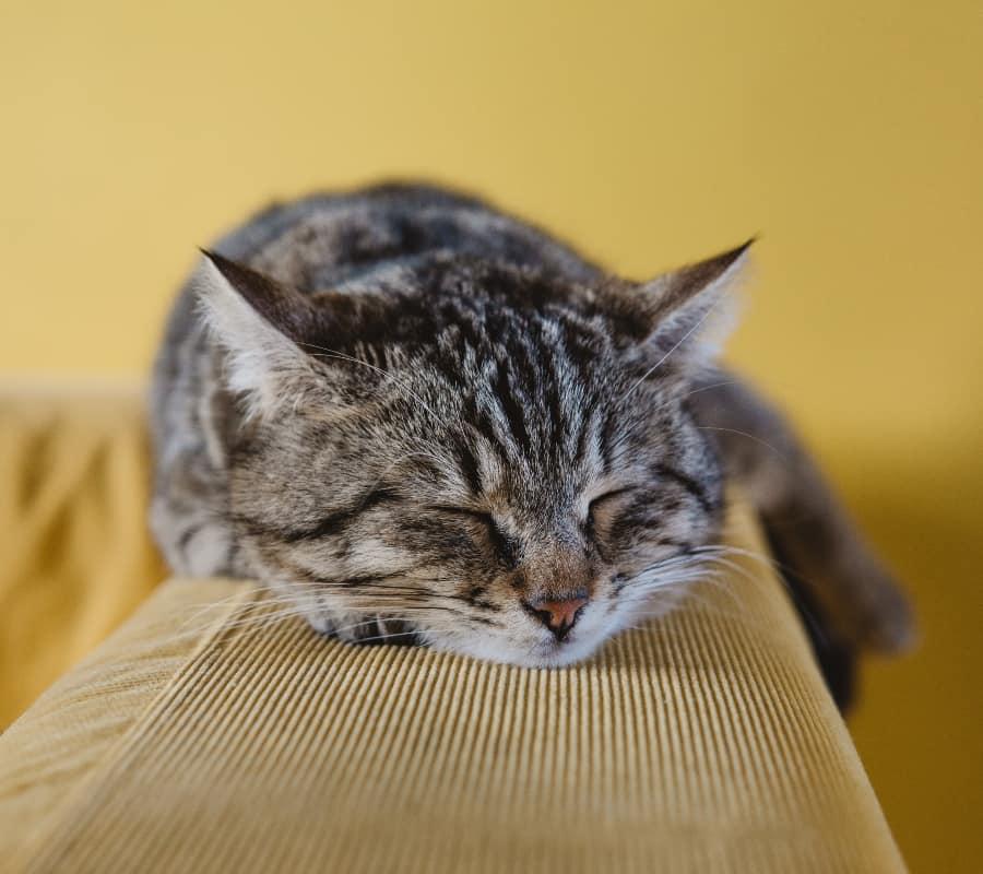 smart home pet care